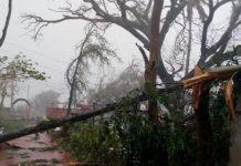 Fallen tree due to severe cyclone storm Titli in Gopalpur Odisha